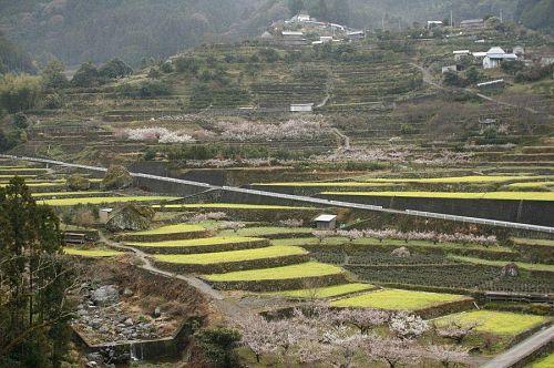 これが、日本でいちばん美しい風景といわしめた江田の棚田。