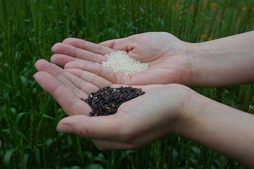 白い米と黒い米
