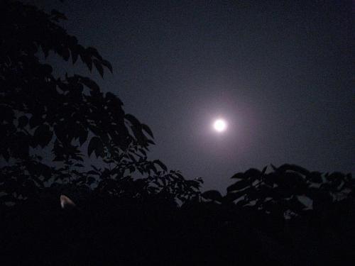 新緑の栗の木のうえにお月さま    神山で暮らし始める前、街に住んでいた頃、満月の夜ってこんなにも明るいということを知りませんでした