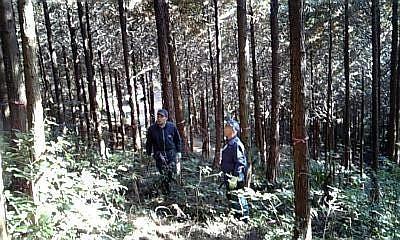 森全体を見るお二人。