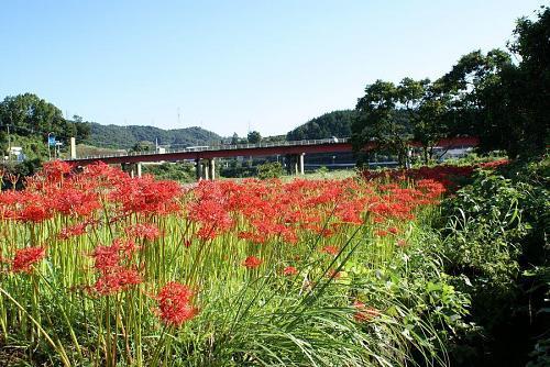 神山ではどこにでも見られるが行者野橋の少し上手の川辺が見事である