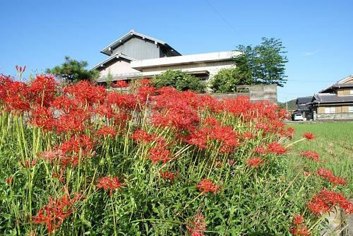 ♪赤い花なら曼珠沙華、♪オランダ屋敷に雨が降る・・、この歌を知っている人はかなりの年配