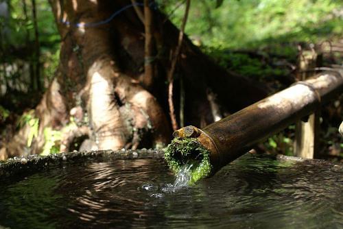 竹の樋がかけられ清水が流れています。
