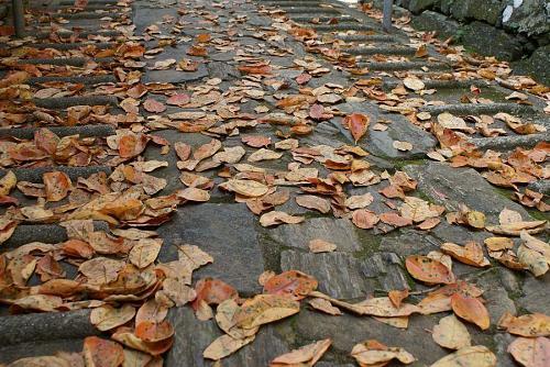 きょうも秋を見つけました。