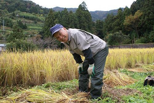 田の畦刈りをする東谷師匠