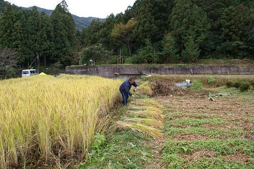 田の畦刈り