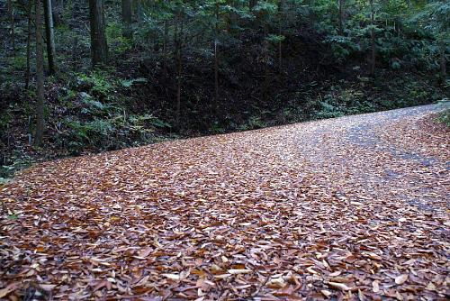 道路も紅葉の絨毯