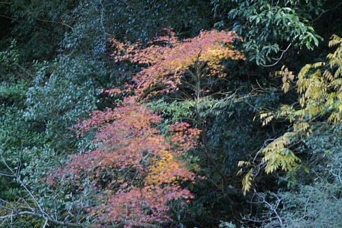 ひょうたん渕の紅葉