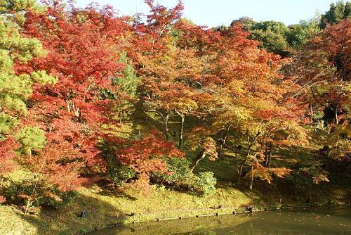 紅葉もあと少しですね。少し色が褪せはじめました。