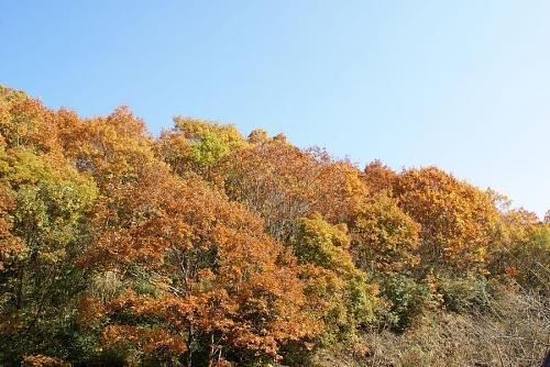 残り少ない紅葉時期を存分に楽しめます。