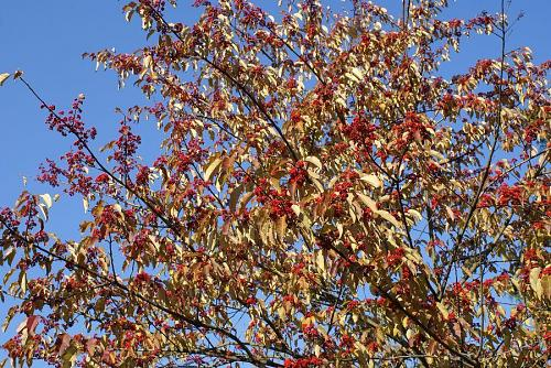 真っ赤な実をつけた木がありました。
