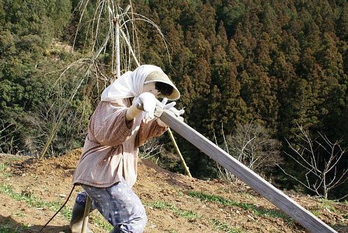 テンガ引き(畑を耕して畝などを作る道具)を女性