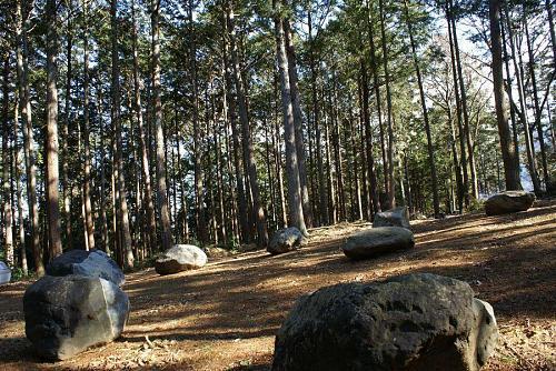 森づくりプロジェクト、2005年3月に始まりました。