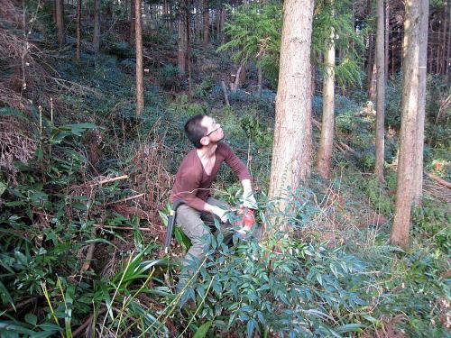 ここで、藤本アニキから「手元やのうて、木の上を見もって切れ!との声が掛かり、慌てて見上げる中脇さん。カメラはブレてえへんのに、本人が自分で動いてブレとるやないですか・・・(笑)