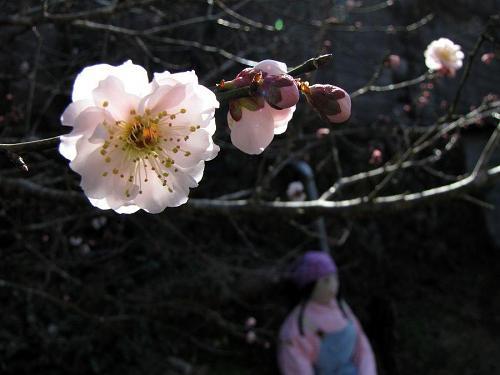 こんな感じで梅の花を眺める。他ではちょっと味わえない雰囲気。乙なものです。