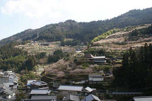 この梅まつり3月22日まで開催されます。