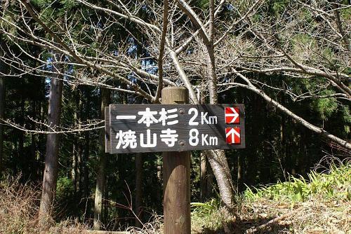 このあたりから道が少し狭くなりますが、乗用車でも大丈夫です。