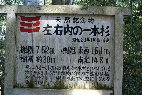 樹齢はかなり古い。県の天然記念物に指定されています。