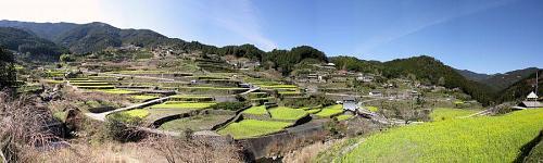 江田のパノラマ写真「棚田と菜の花」 (2009年3月21日09:43撮影)