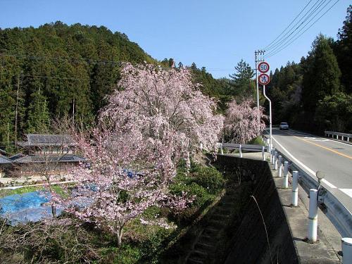 国道438号沿い(神領字東青井夫) 2009年3月24日09:23撮影