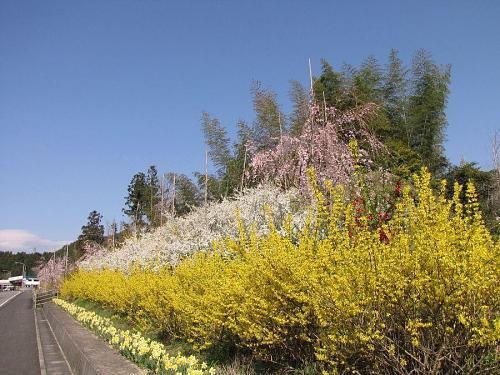 国道438号新府能トンネルから約1kmの地点(2009年3月24日09:08撮影)