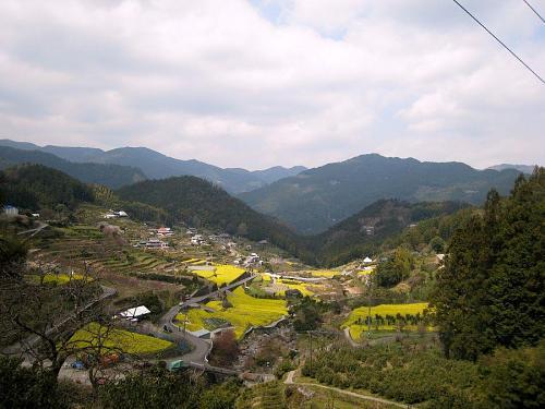 """集落南側""""ツエ・スポット""""からの眺め。だんだんと黄色が濃くなってきました。 2009年3月29日12:27撮影"""