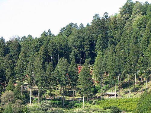 「花の隠里」の拡大写真。赤、朱、ピンクのツツジや、手づくりの木製展望台が見えています。(2009年4月22日10:41撮影)