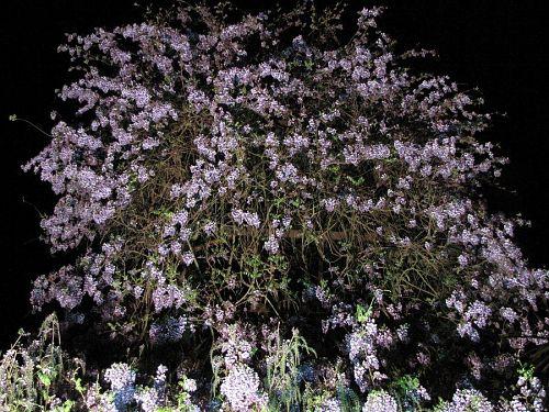 農水省モデル事業で導入したライトアップ機材が威力を発揮!(2009年4月19日19:39撮影)