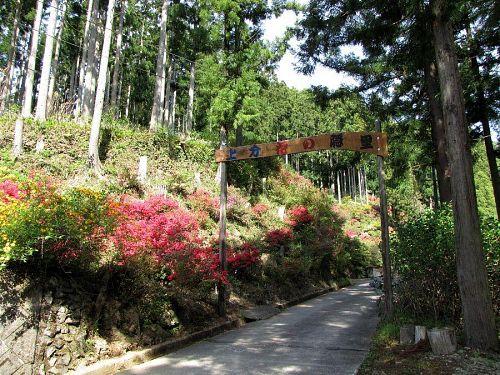 きれいに整備された杉の木立に囲まれた「花の隠里」。ゲートくぐる前からツツジの出迎えを受けます。2009年4月22日10:37撮影