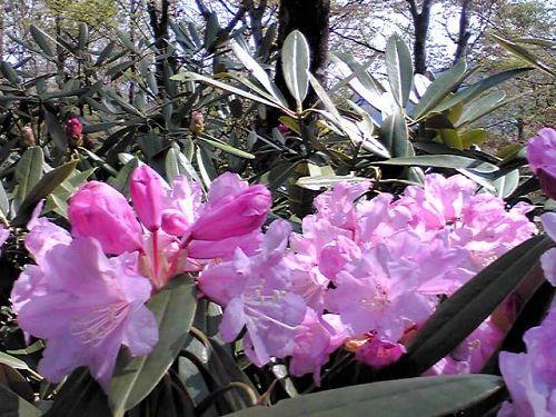 2009年4月28日(月)09:33 ・ 「岳人の森」山田充氏撮影