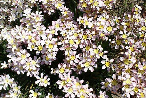 よく似た花でこれも名前を知らない。