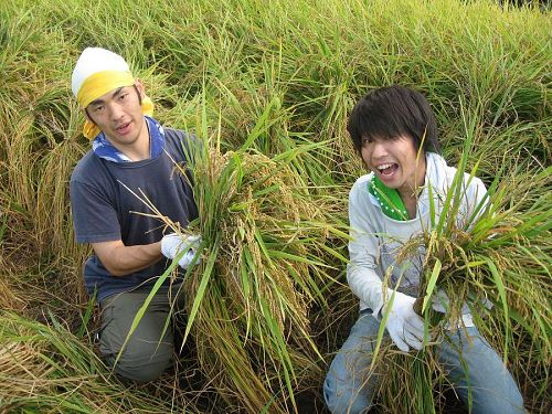 19日、稲刈りの準備を手伝う山口さんと堀越さん。「答は現場にあり」ってことなんでしょうねぇ。撮影:祁答院弘智さん
