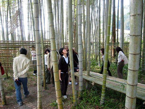 栗生野に完成しているキャメロンさんの竹林の作品を体験。「教えてください神様!私は(竹林の)賢人でしょうか・・・(笑)