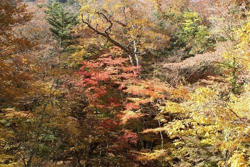 土須峠を越えると実に見事な紅葉が広がります。