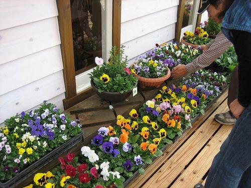 浦辺さんのきれいなお花も買えるんでよ。