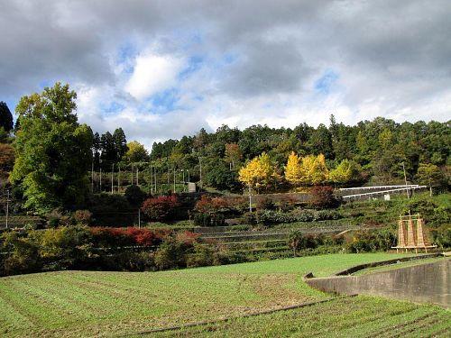 先端部から少しずつ黄葉が始まっています。2009年11月13日13:54撮影