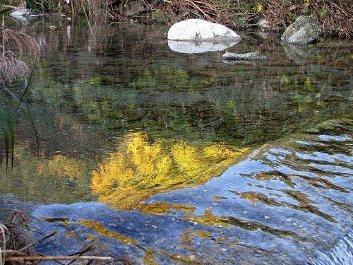 朝露でジーンズを濡らしながら谷川へ下りていくと、こんな感じの黄葉も楽しめる。(2009年11月26日08:30 撮影)