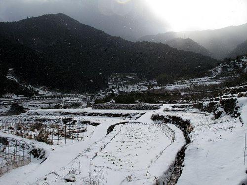 気温マイナス1度。秋にお米を収穫した棚田はすっぽりと雪に包まれています。。(撮影:2010年1月1日10:42@上分字江田)