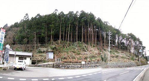 「2月の森づくり」(2010年2月14日)の成果。
