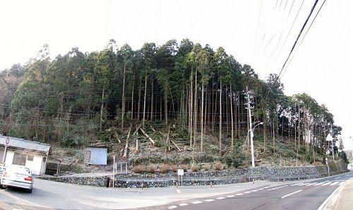 「1月の森づくり」(2010年1月24日)の成果。