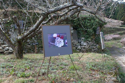 「梅林ギャラリー」と石垣写真展。