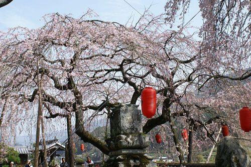 これからの季節、神山花街道を十分ご堪能ください。