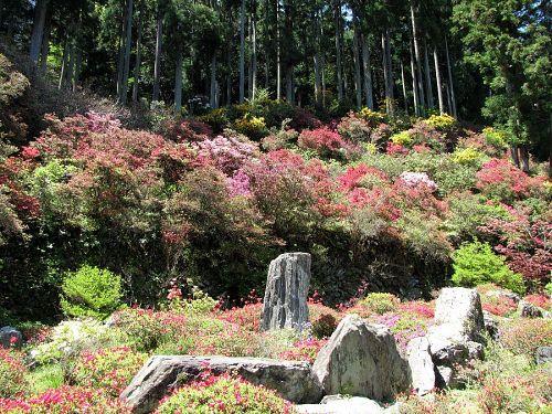 メインのツツジ庭園は現在3分咲き。月末からが本番です。(撮影2010年4月25日12:10)