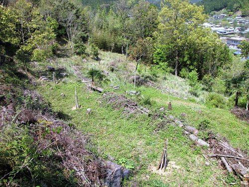 2月に植えた時は鹿除けの竹囲いを巡らせていました。(2010年4月25日撮影)