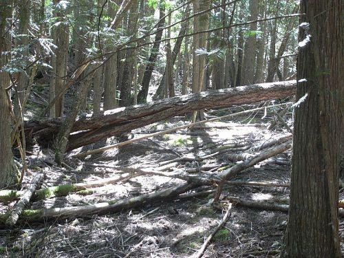 里山と違う森のあり方