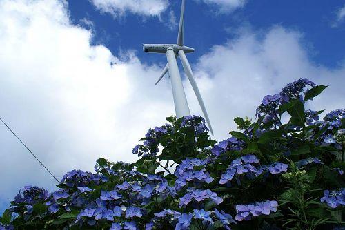 アジサイと風車、この組み合わせが実にいい。