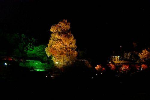 晩秋の風物詩。ライトアップで浮かび上がる「大久保の乳いちょう」