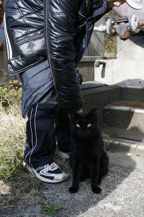 猫とじゃれる名ガイド。「写真撮ってもいいよ」と猫のポーズ指定までしてくれました。