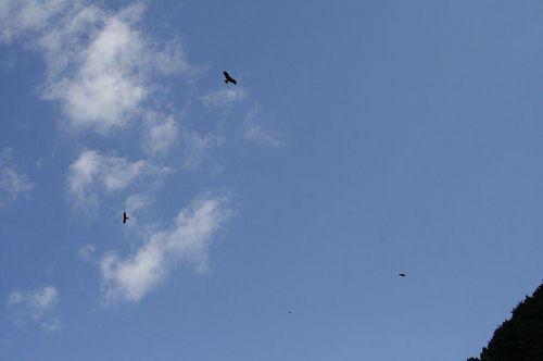 にんげんの数より多いのでは?とおもうぐらいいろんな鳥がいました。