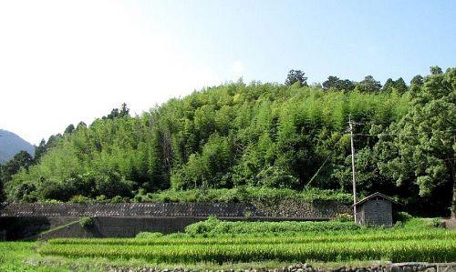 ジャングル状態でした。手前の畑までも飲み込んでしまいそうな勢いで繁茂。(2010年8月23日)